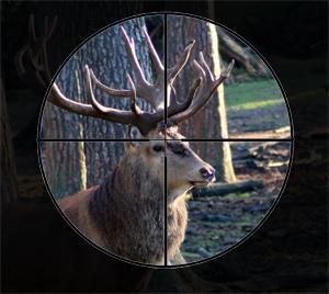 Ein Hirsch im Visier